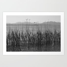 Quiet lake Art Print