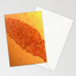 Dirus mal ar Stationery Cards