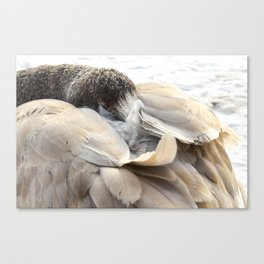Young Trumpeter Swan by Teresa Thompson Canvas Print
