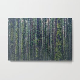 forest landscape photography tree background - trees vintage style Metal Print