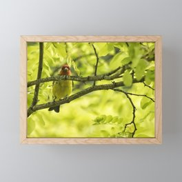 Male Western Tanager, No. 1 Framed Mini Art Print
