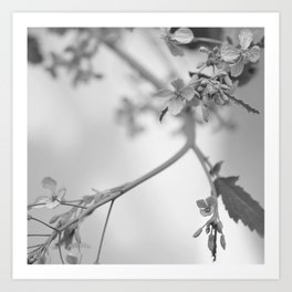 grays Art Print