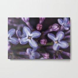 Lilacs close up Metal Print