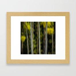 Quaking Aspen Framed Art Print