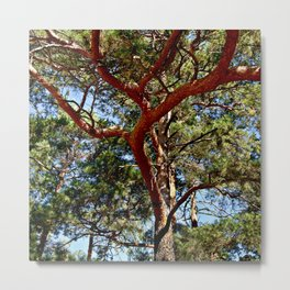Autumnal lure of the forest Metal Print