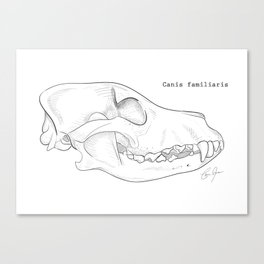Domestic dog skull line drawing Canvas Print