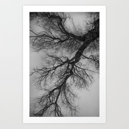 Lungs of the Earth | Nature Photography | Weeping Willow | Black and White | black-and-white | bw Art Print
