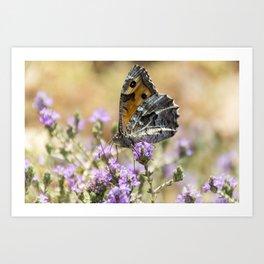 Hipparchia cretica Butterfly Art Print