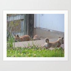 fox IX Art Print