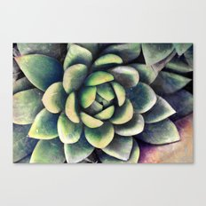 Green & yellow succulent Canvas Print