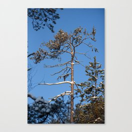 Frosty day in forest Canvas Print