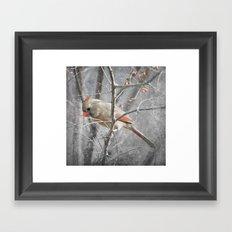 Female Cardinal Framed Art Print