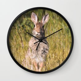 Cute and Curious Eastern Cottontail Rabbit in the Long Grass Wall Clock