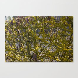 Moss in the Spring Canvas Print