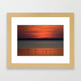 A flock of geese flying north across the calm evening waters of the bay Framed Art Print