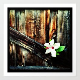 Old wood and a flower. Art Print