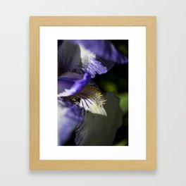 Purple Petals Framed Art Print
