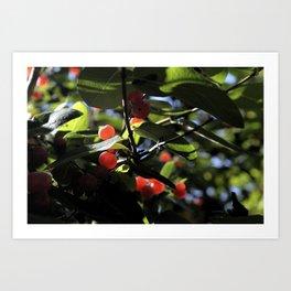 Jane's Garden - Sunkissed Red Berries Art Print