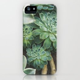 Botanical Gardens - Succulent #625 iPhone Case