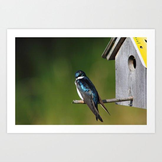 Barn Swallow Art Print