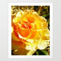 roses IXX Art Print