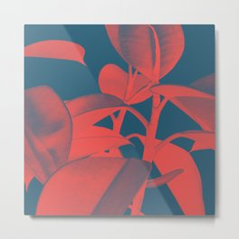 Rubber Plant red and blue Metal Print