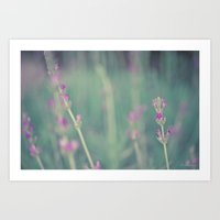 lavender Art Prints featuring Lavender by Light Wanderer