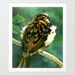 Sparrow in Puriri Tree Art Print