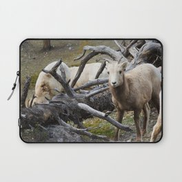 White Goats & A Dead Tree Laptop Sleeve