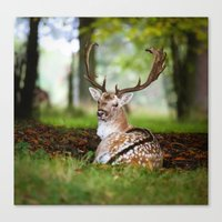 bambi Canvas Prints featuring Bambi  :)  by Ironia Art