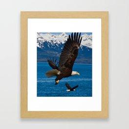 Bald Eagles Soaring Framed Art Print