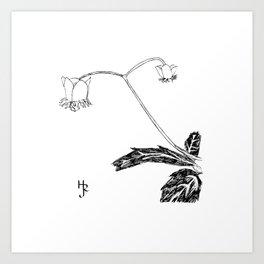 Spotted Wintergreen Art Print