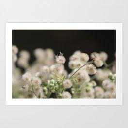 Macro of Fluffy Seed Heads at Sunnyland Estates Art Print