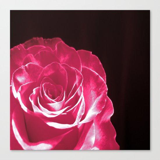 Colours Rose Canvas Print