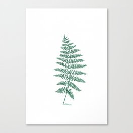 New Zealand Tree Fern Canvas Print