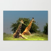 giraffes Canvas Prints featuring Giraffes by Julie Hoddinott