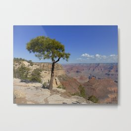 Grand Canyon Pine Metal Print