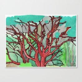 Manzanita Canvas Print