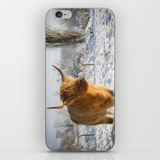 Highland Cow in the snow iPhone & iPod Skin