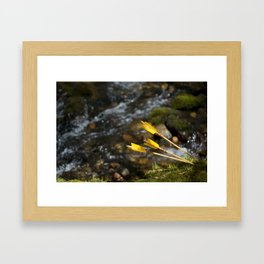Wild arrows - 1 Framed Art Print