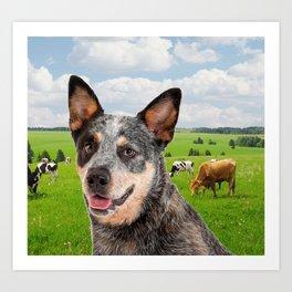 Australian Cattle Dog Blue Art Print