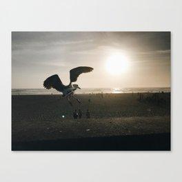 dust Canvas Print