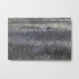 Marsh Grass Metal Print