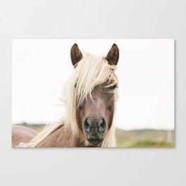 Horse V2 Canvas Print