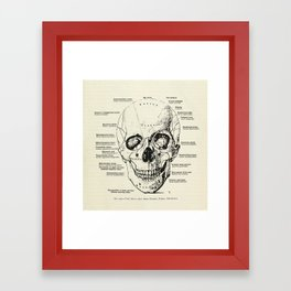 Vintage Anatomy Skull  Framed Art Print