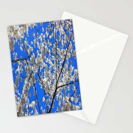 Cherry Blossoms in DC Stationery Cards