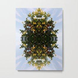 fairfax lemon tree 2 Metal Print