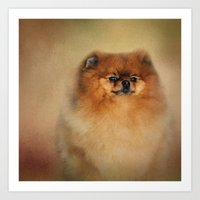 pomeranian Art Prints featuring Proud Pomeranian by Jai Johnson