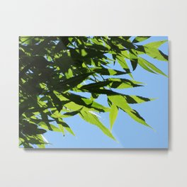 Leaves and Shadows | Barwon Heads | Green Leaves Art Print Metal Print