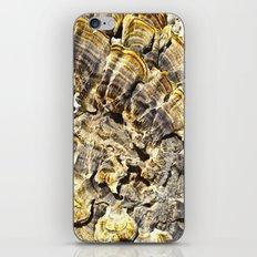 Fungi Day iPhone & iPod Skin
